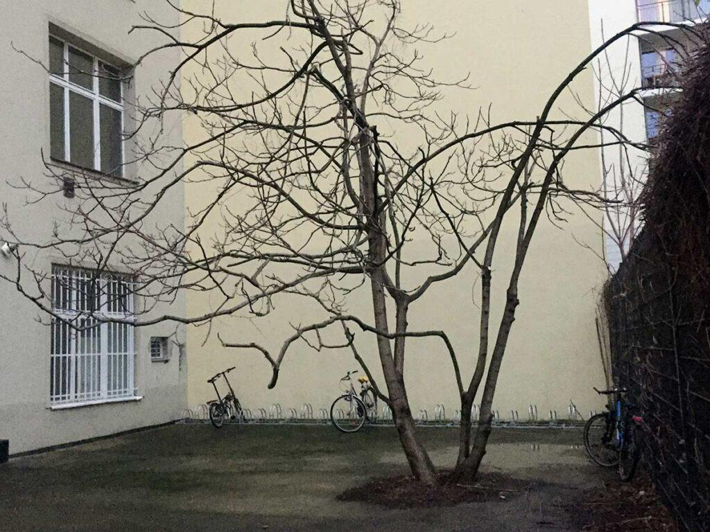 13_Foto-Margit-Behrend_Hof-mit-Baum